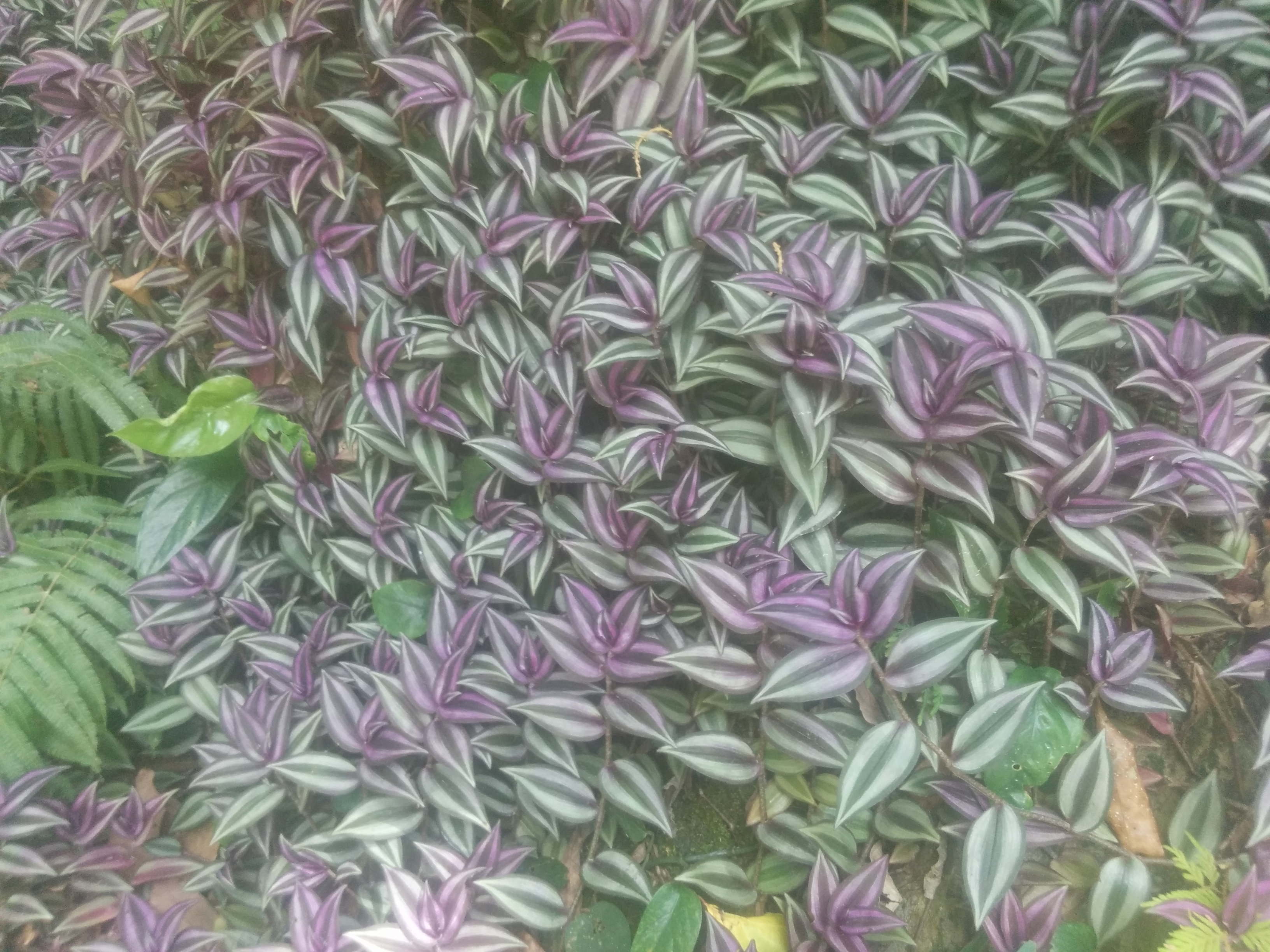 Some cute purple plant growing along the river