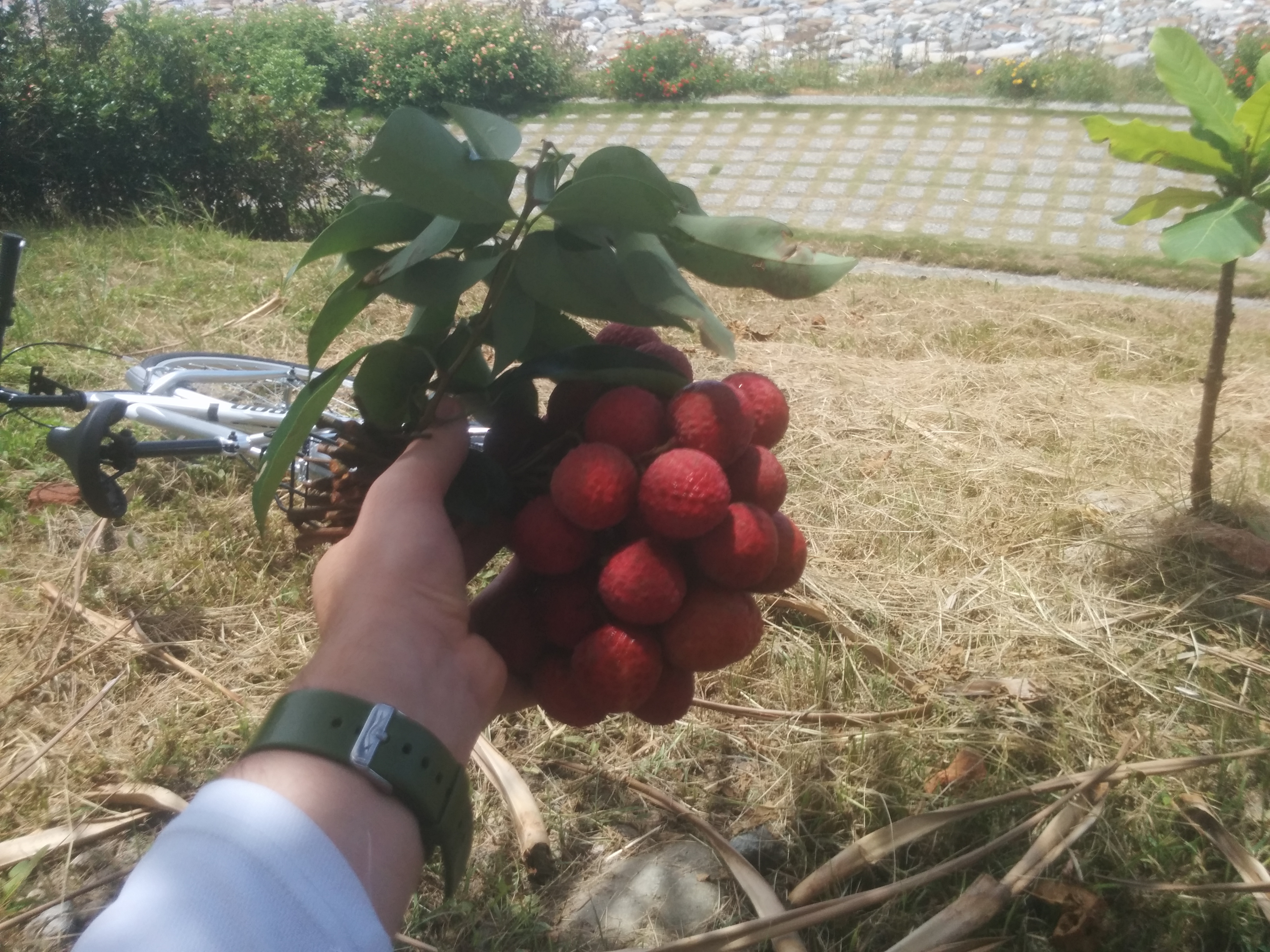 The litchis I ate, with part of my new bike in the background